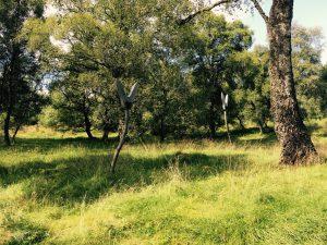 Woodland mystery